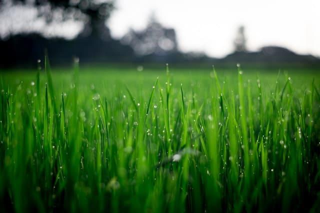 Zakładanie trawnika z siewu - krok po kroku