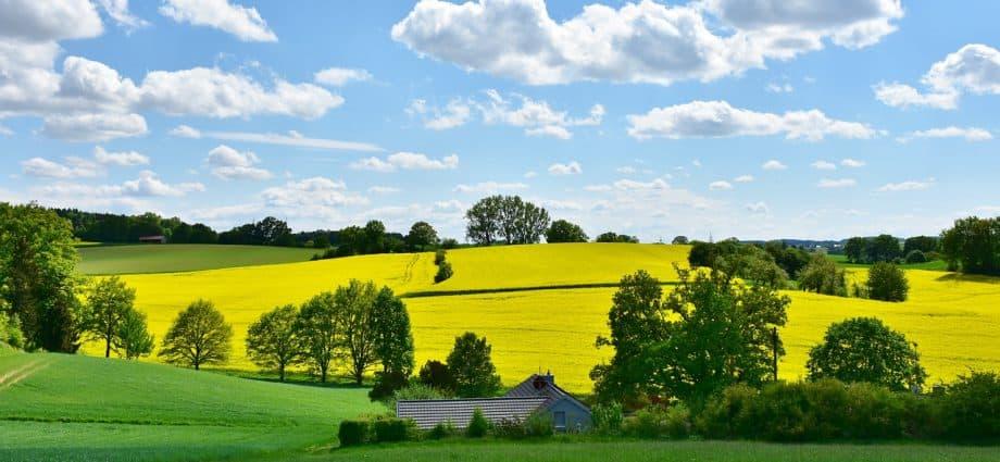 Jak właściwie zadbać o nasz ogród?